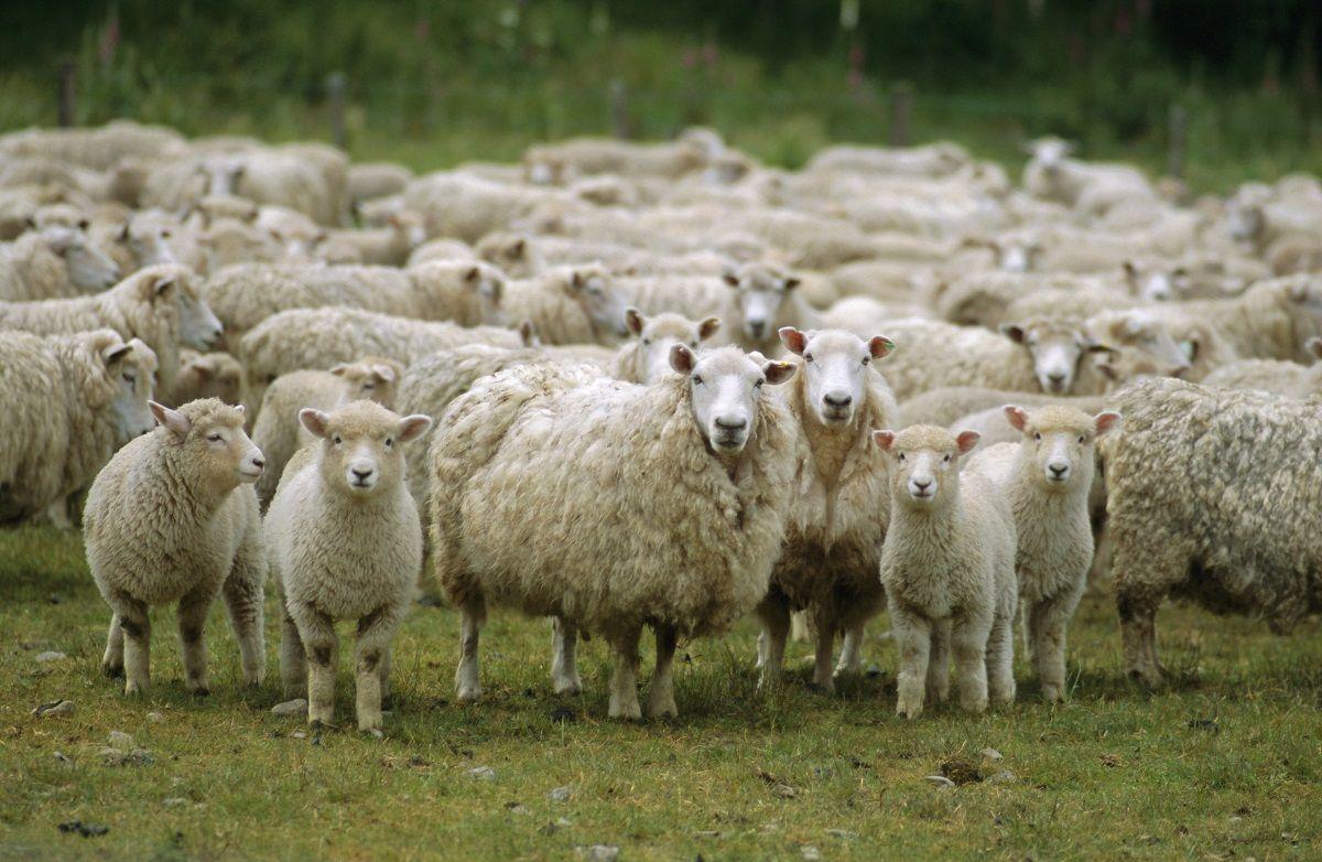 Šta je konformizam i kako da ne budeš ovca