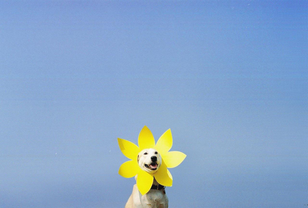 Gluta – najsrećniji pas na svetu