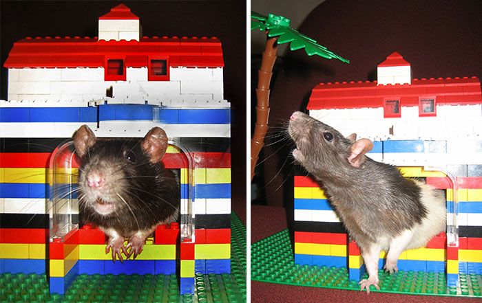 Lego kockice u nešto drugačijoj funkciji