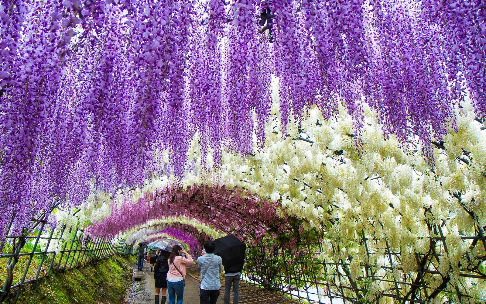 Magična šetnja kroz japanske vrtove