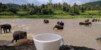 Slonovi NE JEDU smoki