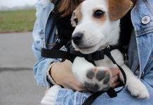 Pismo jednog šteneta: Mama, tata, ne brinite, ovde sam srećan